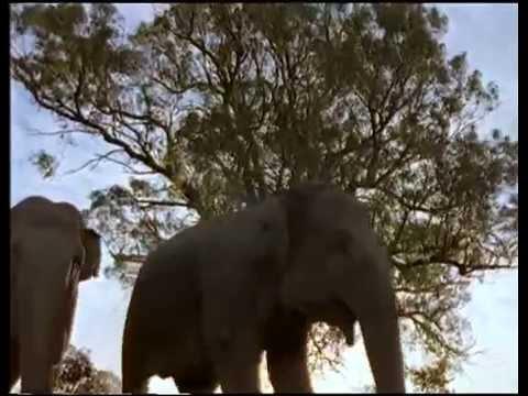 Trailer do filme A Arca de Noé