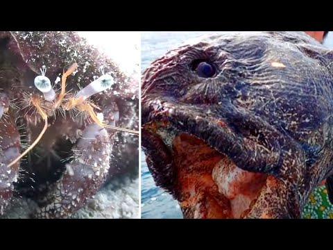 12 Mysterious Creatures Discovered After Tsunamis