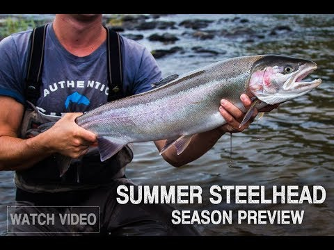 Rogue River Summer Steelhead Preview