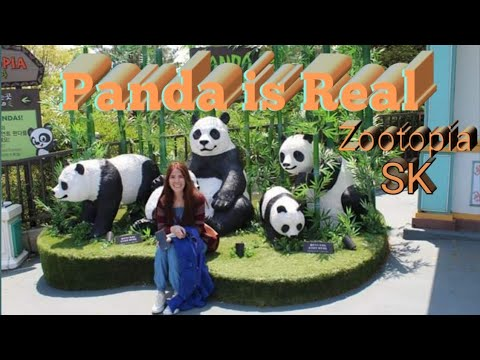Panda is Real, The Bamboo Master | Everland, South Korea | Korea Travel Guide | Toothless Vampire
