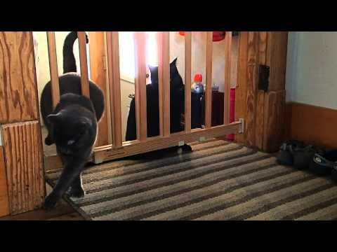 Cat vs Baby Gate