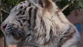 Красота диких животных УДИВИТЕЛЬНЫЙ мир дикой природы