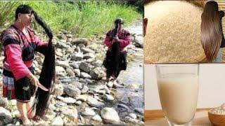 مياه الرز المخمرة معجزة الشعر وسر طول وقوة وجمال الشعر في اسيا