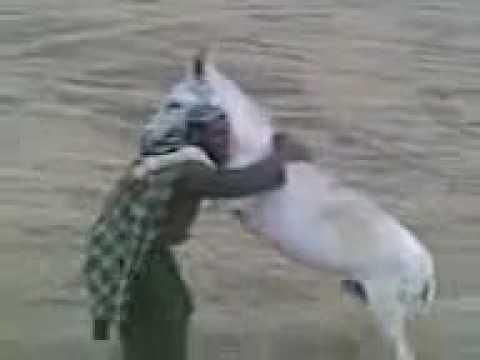 پشتون خر در مقابل خر Pashtun vs Donkey thumbnail