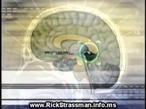 Pineal Gland:  Dr Rick Strassman on DMT