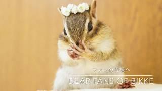 Precious memories with Chipmunk Bikke/シマリスのビッケ