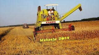 Żniwa 2014 - Pszenżyto || Claas Mercator 75, Case 956xl, Ursus c330 || ^Lubelskie^