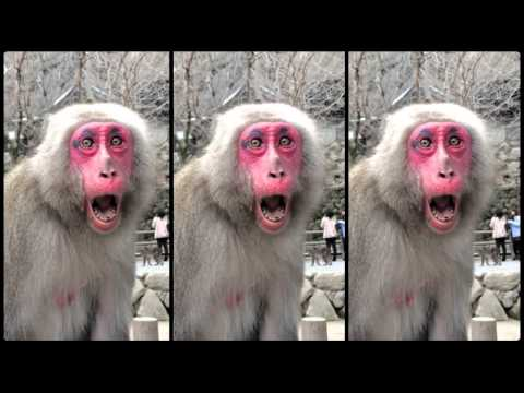 Monkey Mountain in Beppu Japan - So Many Japanese Makak Monkeys!