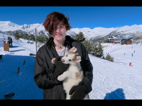 Puppies And Sledding (Andorra)