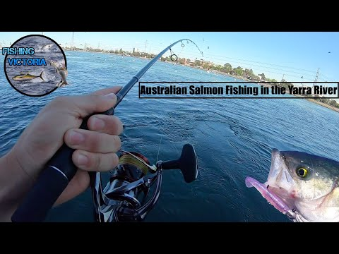 Australian Salmon Fishing In The Yarra River!