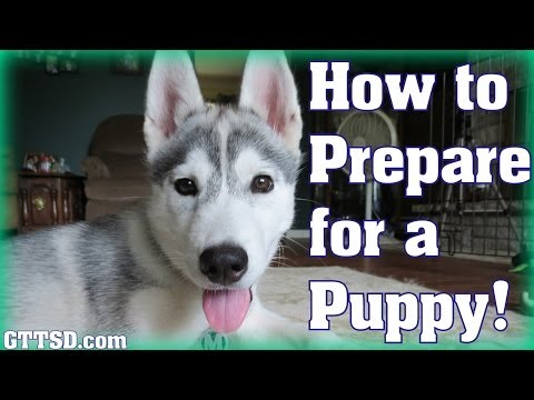 HOW TO PREPARE FOR A PUPPY | Bringing home a Husky Puppy