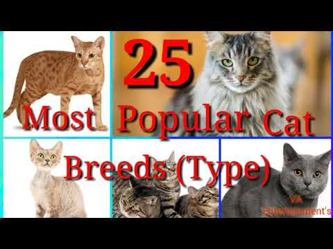 Top 25 world most popular cats  breeds ( type ) \ most famous cat for pets /  बिल्लीओंके प्रकार .