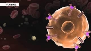 что такое инсулин?  Какая роль инсулина в организме человека?