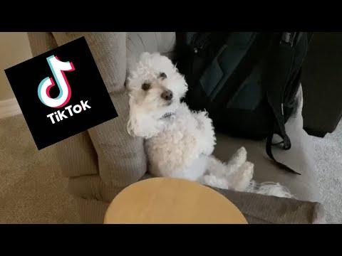 Quincy Dog Tik Tok Compilation #2