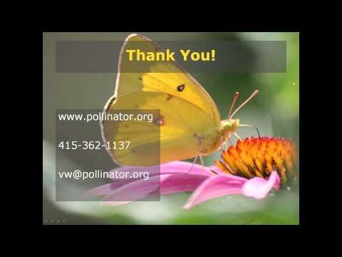 Pollinators 101 March 14 2013