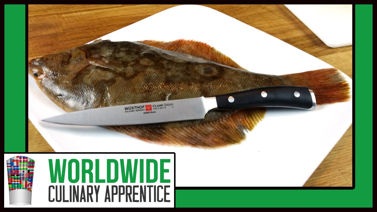 Filleting a sole how to fillet a flounder fluke for How to cook sole fish