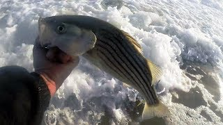 LAST MINUTE Striped Bass Surf Fishing TIPS & TRICKS - Stripers in LATE FALL