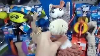 Что нужно купить для щенка?  Йоркширский терьер. Покупки в зоомагазине