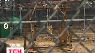 Защитники животных взялись за украинских медведей