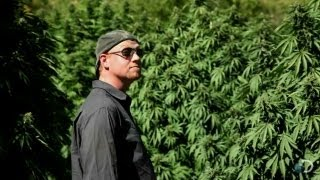 Continuous War | Weed Country