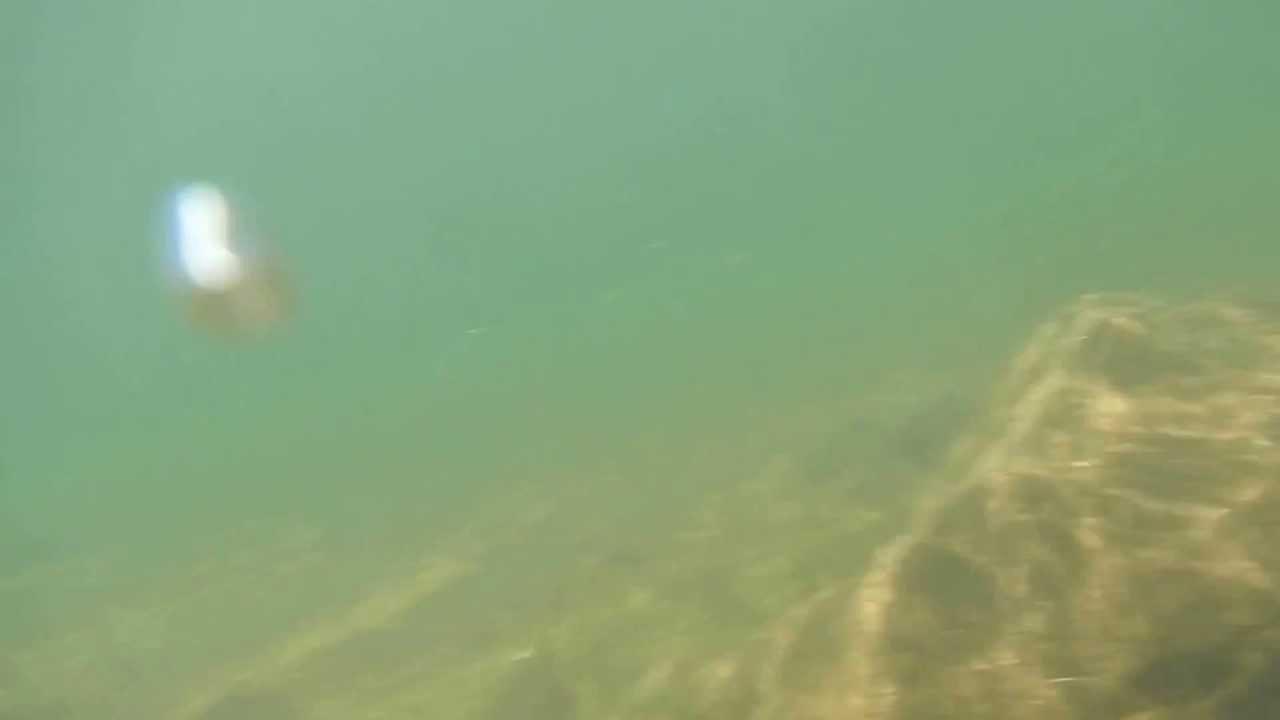 Aw100 nikon under water test millerton lake ca youtube for Millerton lake fishing