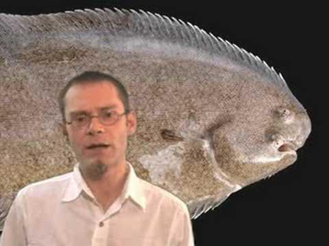 No Floundering Over Flatfish Evolution