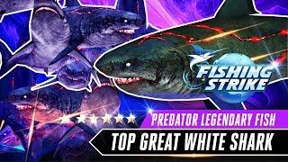 TOP PREDATOR GREAT WHITE SHARK FULL TANK LEGENDARY FISH【釣魚大亨 Fishing Strike 피싱스트라이크】