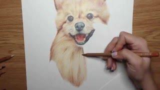Fudge the Pomeranian - Time Lapse