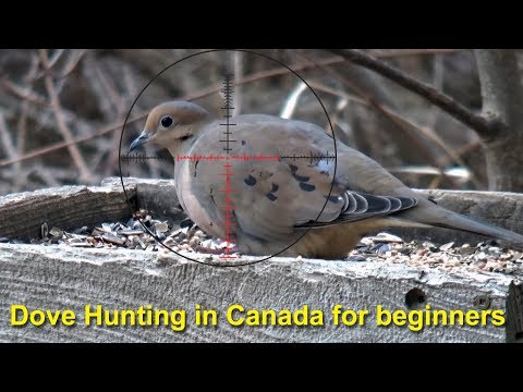 How To Hunt Doves In Canada For Beginners  - Part 1: Preparing For 2018 Opening Day