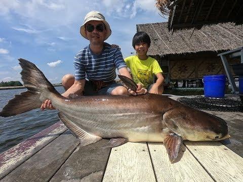Father & Son Mekong Catfish Fishing Thailand 2019- BKKGUY