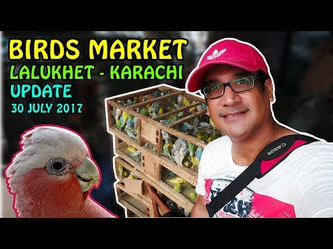 Birds Market Karachi Lalukhet update | Exotic Birds for Sale | Video in URDU/HINDI