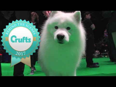 Meet the Best Big Dogs at Crufts 2017