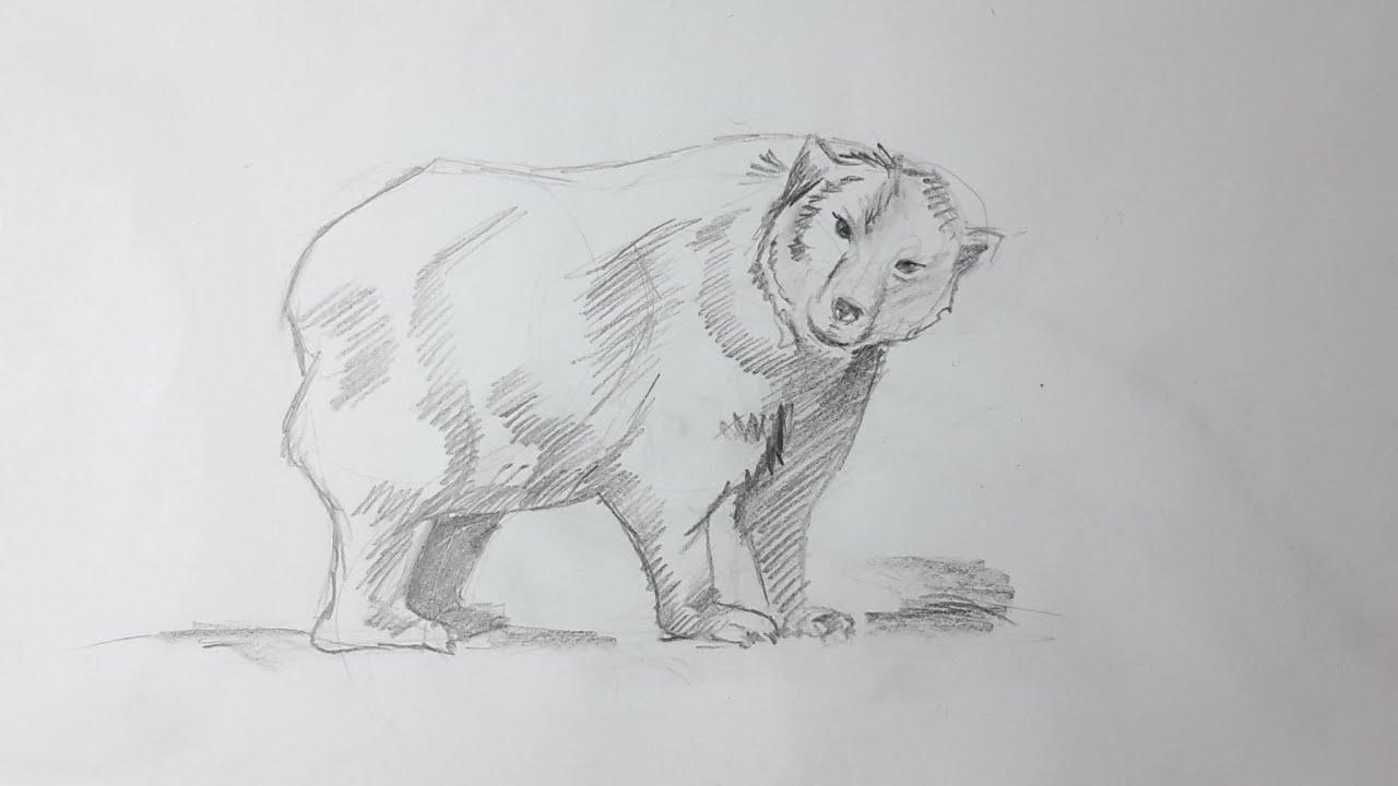 Como dibujar un oso paso a paso El Dibujante  YouTube