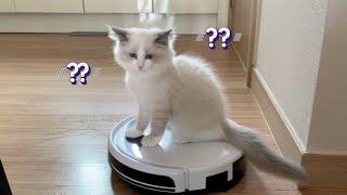 로봇청소기 타는 아기고양이 율무