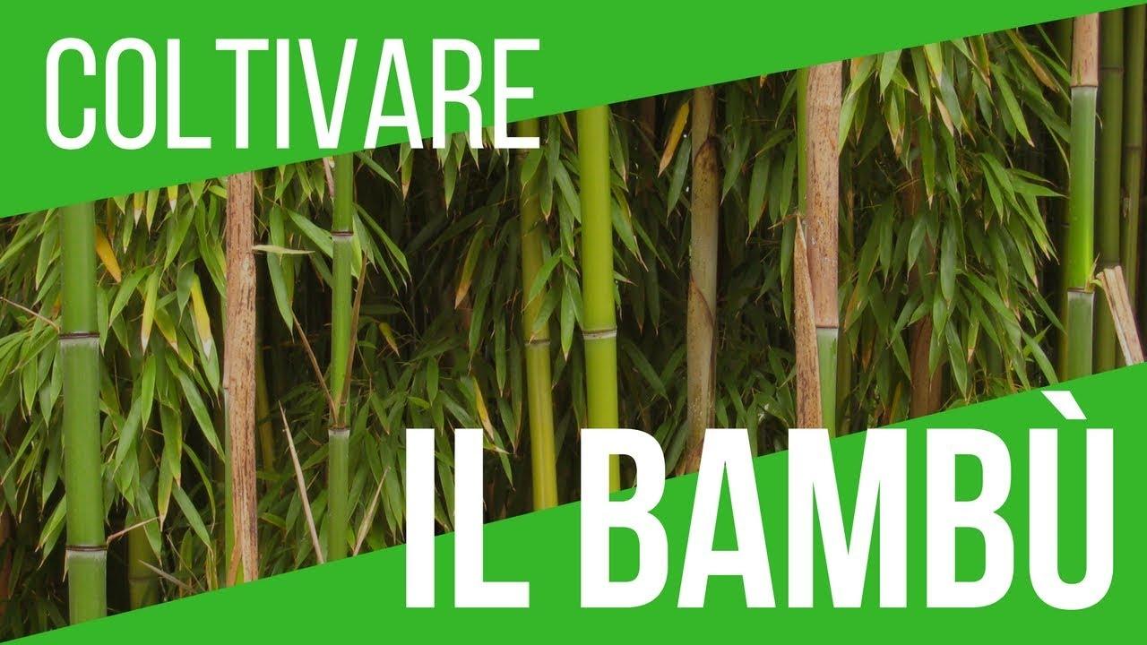 Coltivare O Eliminare Il Bambù Uso Bambù Nell Orto Vita Del Podere Orto E Giardinaggio