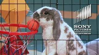 Bini The Bunny - The Gong Show