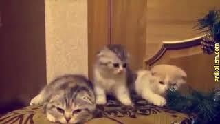 Приколы с котами и кошками 2018 #1  Подборка самых смешных видео с котами и кошками