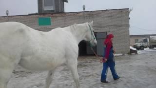как управлять волей боязливой лошади с помощью морковки