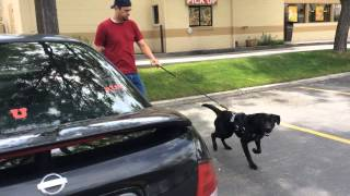 Service Dog Training For Children With Autism- Utah- 801-895-2731
