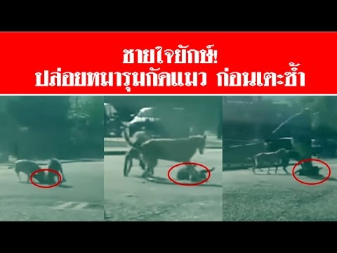คลิปชายใจยักษ์! ปล่อยหมารุมกัดแมว ก่อนเตะซ้ำ #สดใหม่ไทยแลนด์  ช่อง2