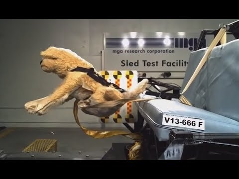 Crash Test For Dogs