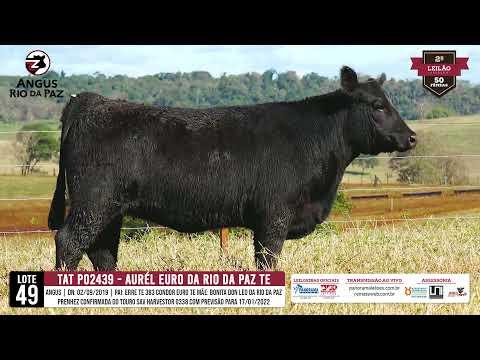 LOTE 49   PO2439 AUREL EURO DA RIO DA PAZ - Prod. Agência e TV El Campo
