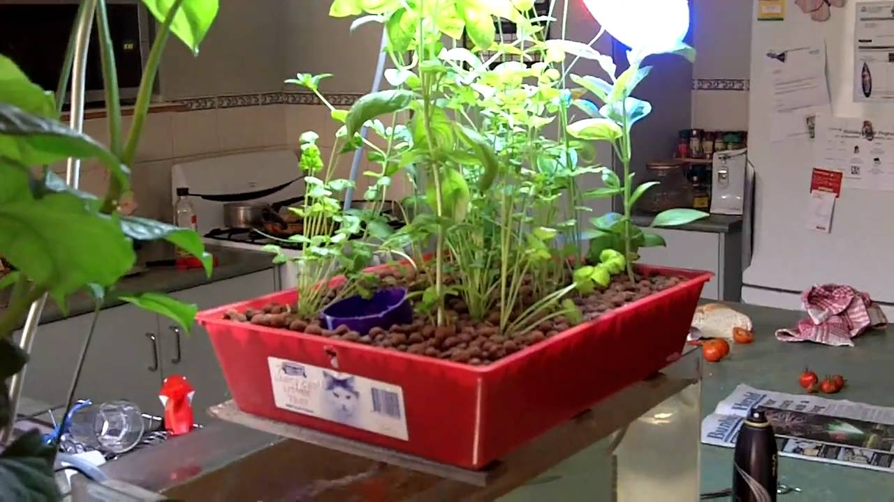 Hydroponic Kitchen Herb Garden Aquaponics Kitchen Herb Garden Youtube