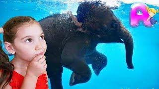 Anna vs Papa play at the zoo