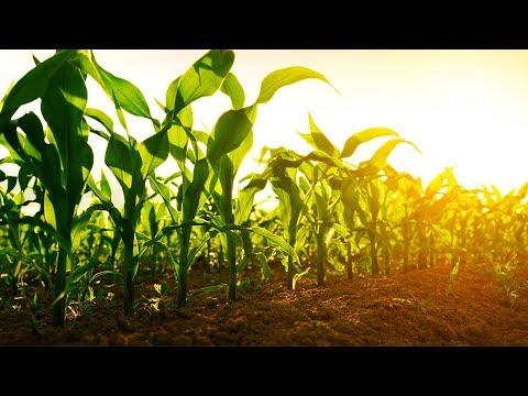 Nobel Laureates Dismiss GMO Fears