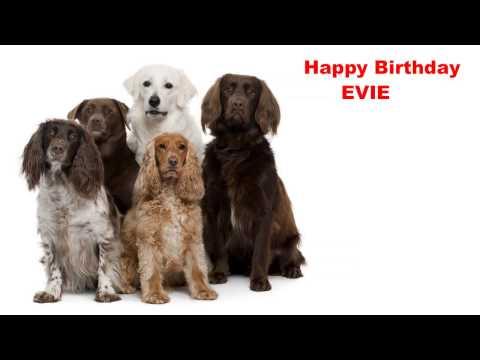 Evie - Dogs Perros - Happy Birthday
