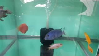 33 gallon aquariums