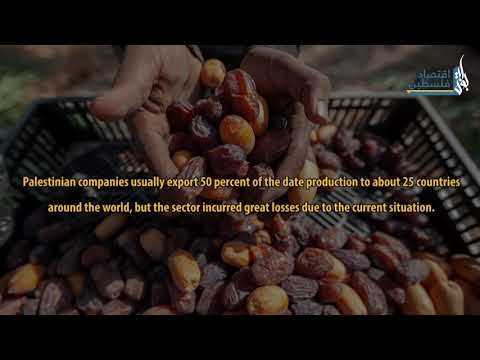 Dates Sector in Palestine…. A heavy toll on Trade