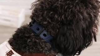강아지 짖음방지기 충전식 자동 스프레이 목걸이 스프레이…