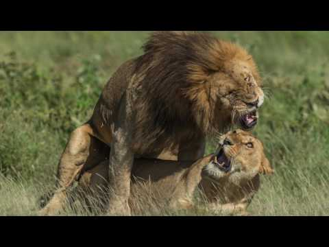 Tanzania Photography Tour 2017  l  4K Action camera  l  HD Video